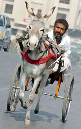 PAKISTAN-DONKEY-CART-RACE